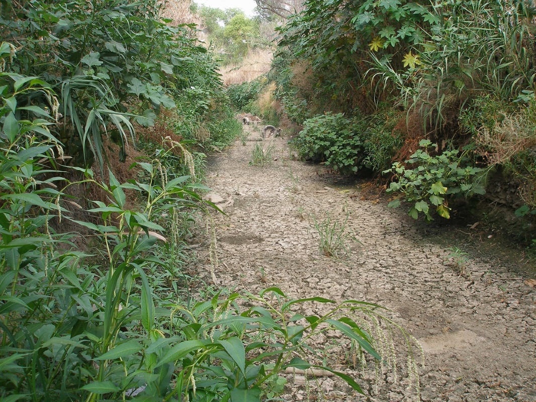 Invasive Plant Control Program: Pilot Channel (7-23-14)