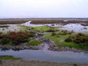 Model Marsh Tidal Creeks