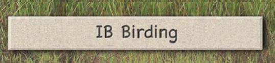 IB Birding